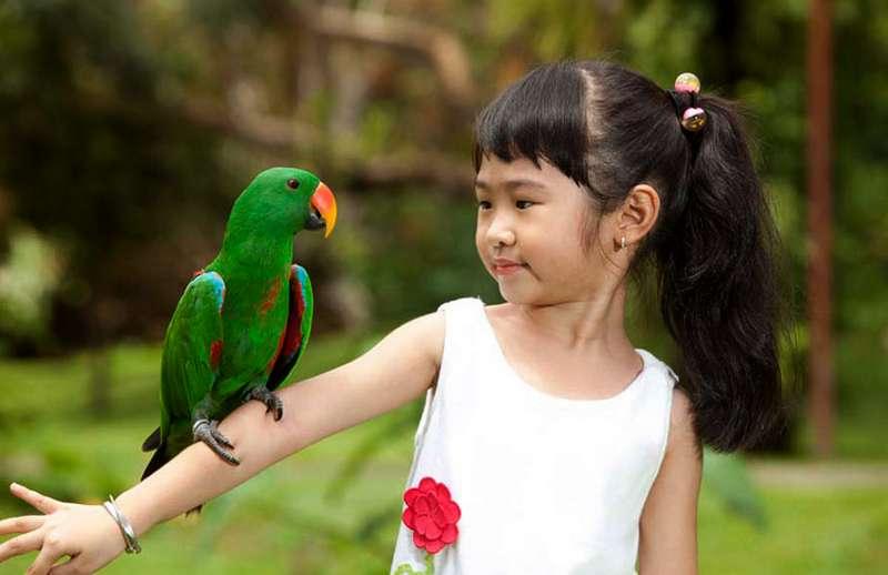 Taman Burung di Bali (Balibirdpark.com)