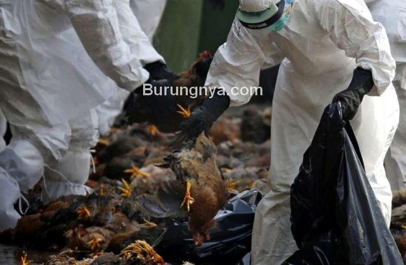 Virus Flu Burung di China (arrahmah.com)