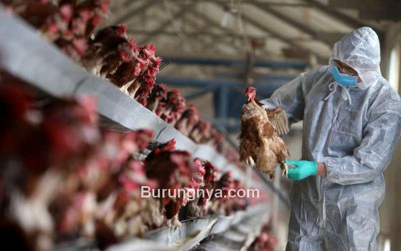Virus Flu Burung (sketsanews.com)