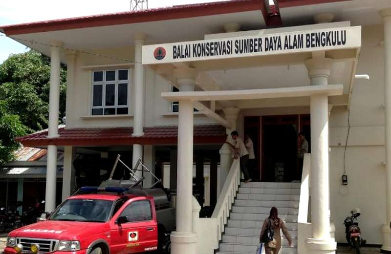 Alamat BKSDA Bengkulu (caribengkulu.com)