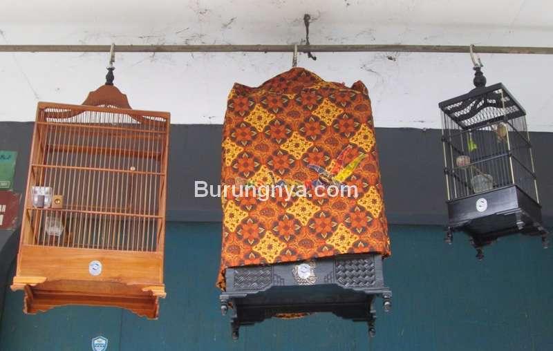 Cara Memaster Kenari agar Cepat Masuk (muraibatu-aceh.blogspot.com)