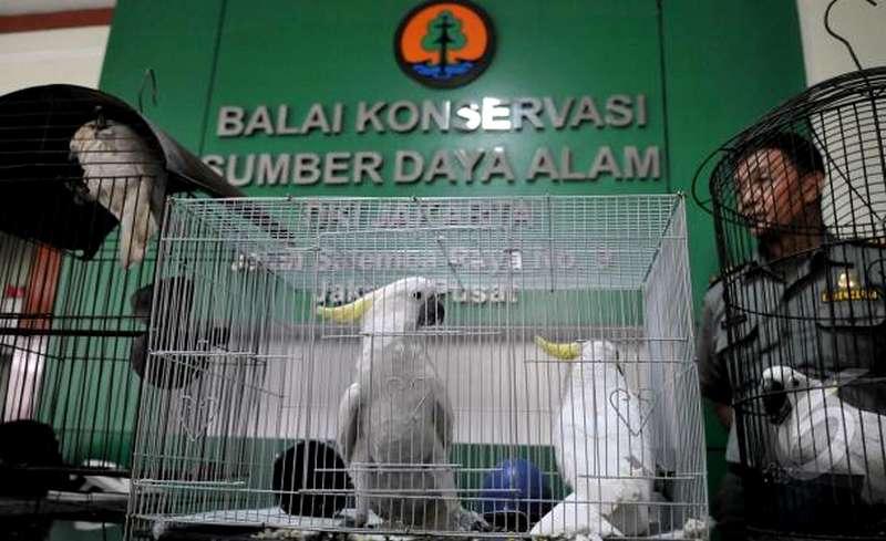 Daftar Alamat Kantor BKSDA di Seluruh Indonesia (kukangku.id)