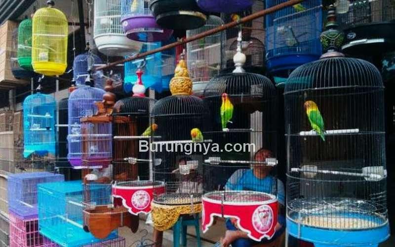 Ilustrasi Pedagang Burung yang Sepi (tribunnews.com)