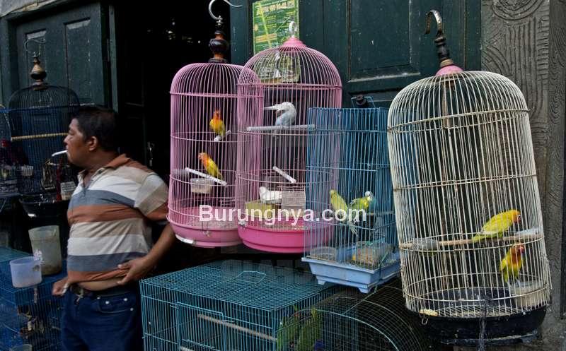 Jenis Burung yang Bagus untuk Bisnis dan Harga Burung Termahal (picfair.com)
