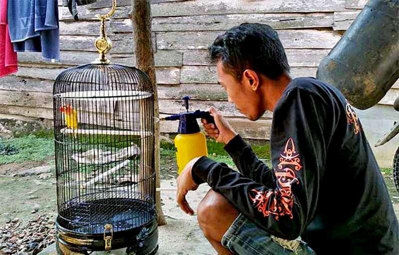 Lovebird Cemplux dan Pemiliknya (burungnews.com)