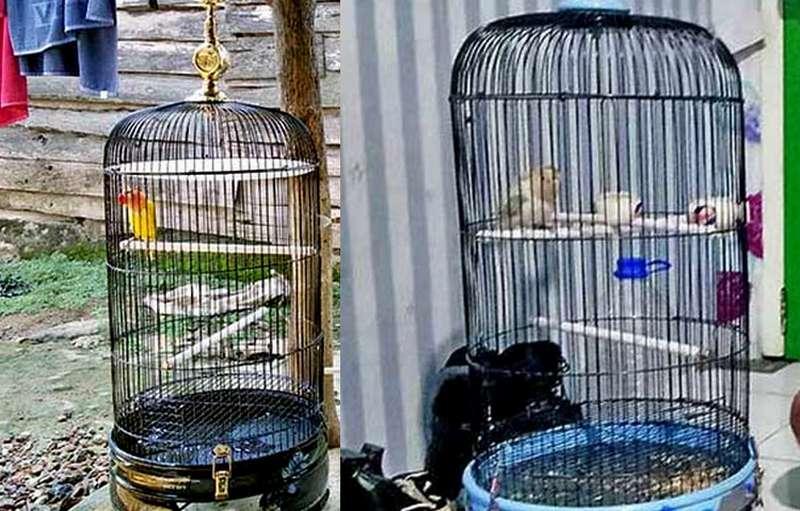 Lovebird Tolak Tawaran Harga Rp 100 Juta (burungnews.com)