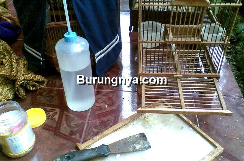 Cara Membersihkan Sangkar Burung yang Bau (rumahsangkicau.blogspot.com)