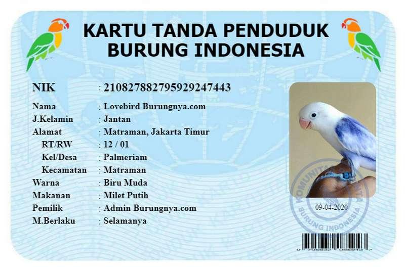 Cara Membuat KTP Burung Indonesia Tanpa Aplikasi (burungnya.com)