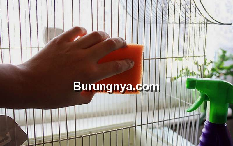 Cara Menghilangkan Bau Tak Sedap pada Kandang Burung (ucoz.com)
