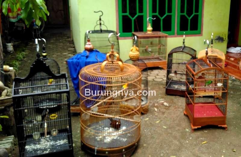 Dampak Negatif Jemur Murai Batu (kangadehikmat.blogspot.com)