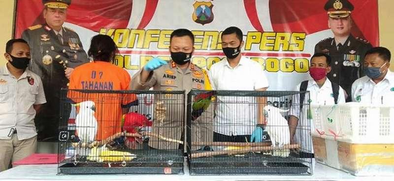 Pemuda Jual Burung Dilindungi Ditangkap Polisi (bangsaonline.com)