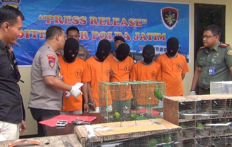Penangkapan Penyelundup Burung Cucak Ijo (pojokpitu.com)