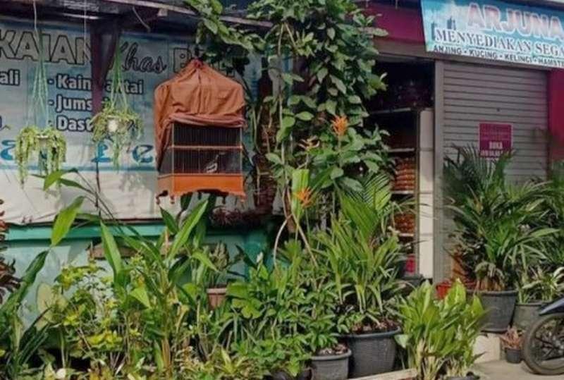 Burung Jalak Suren yang hilang dikembalikan maling 3 hari kemudian (jatimtimes.com)