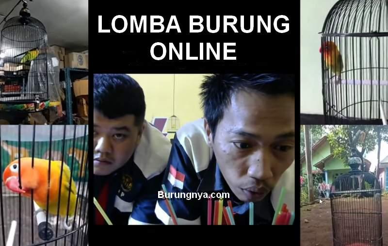 Lomba Burung Online (youtube.com-aaduki)