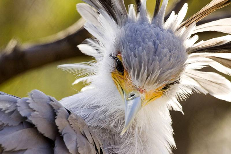 Burung Cantik dengan Bulu Mata Lentik (Brian Connolly)