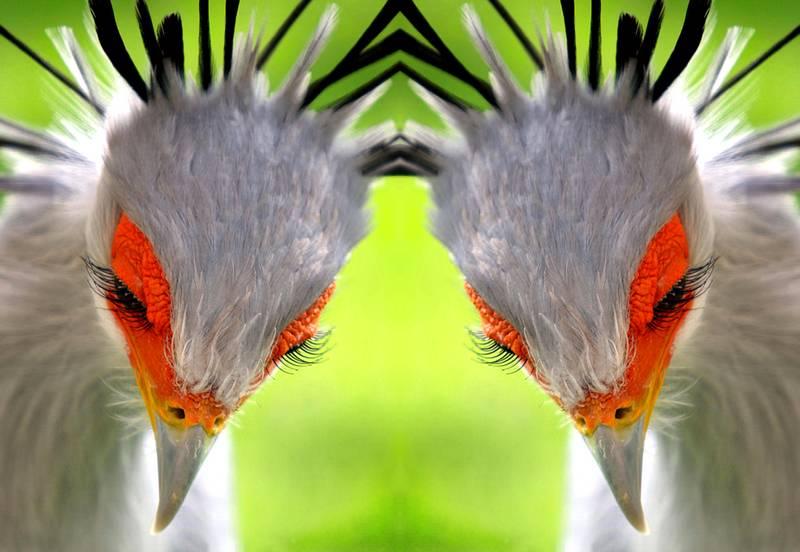 Burung Cantik dengan Bulu Mata Lentik dan Unik (Rudi Luyten)