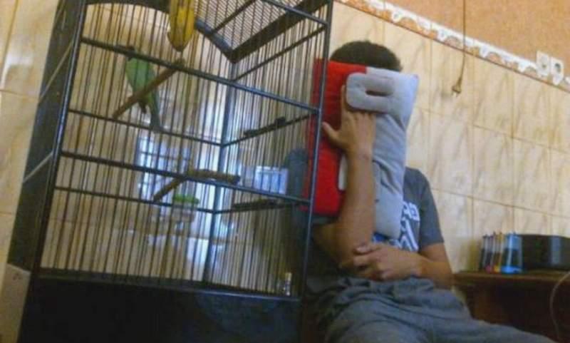 Maling Burung Cucak Ijo (apahabar.com)
