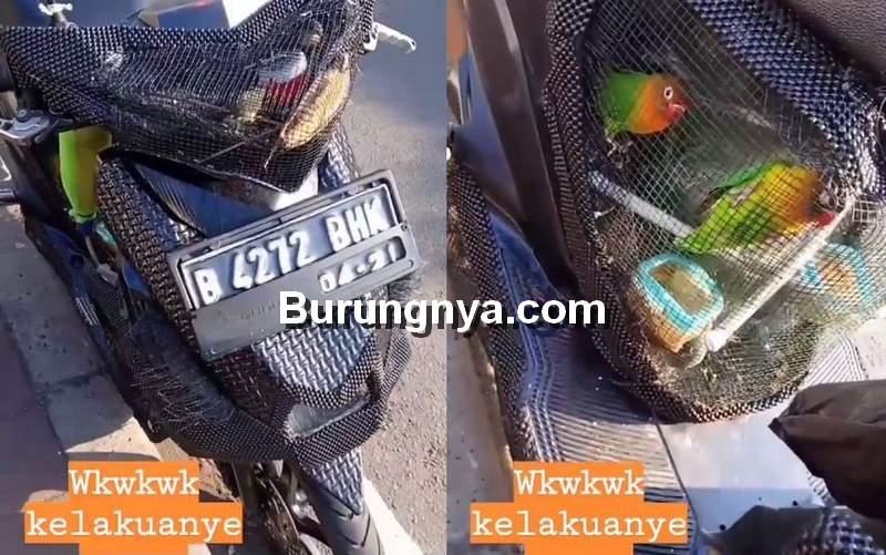 Modifikasi Motor Jadi Sangkar Burung (instagram.com)