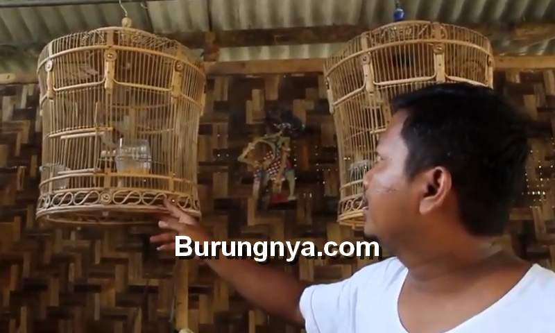 Sangkar Perkutut Mataraman yang Dijual di Pasaran (youtube.com)