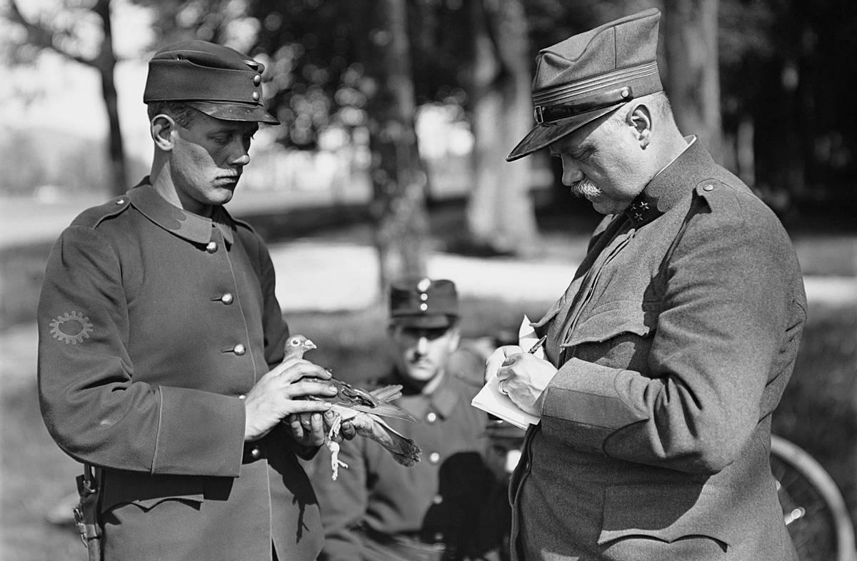 Sejarah Merpati Pos untuk Perang (wikipedia.org)