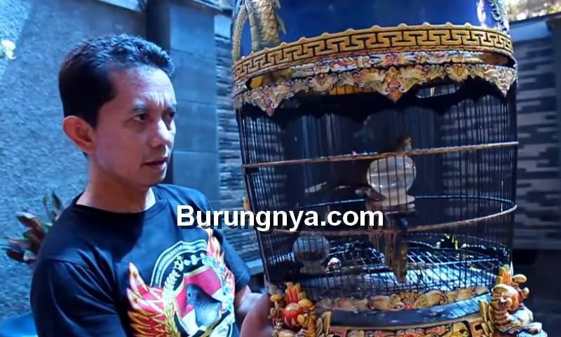 Jenis Ciri Mathi Katuranggan Perkutut Langka (youtube.com)