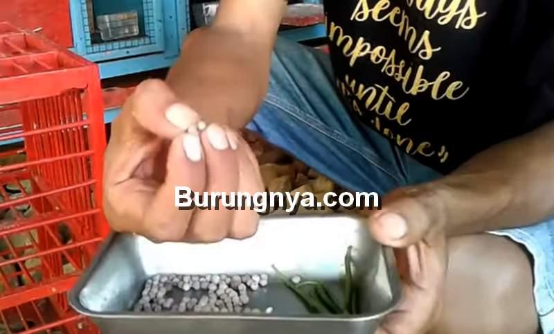 Makanan Merpati agar Cepat Giring Keket Keras (youtube.com)