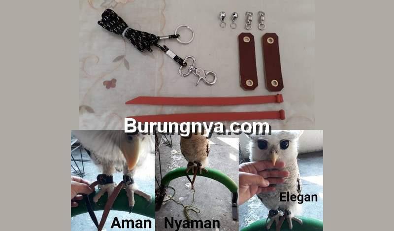 Peralatan untuk Merawat Burung Hantu (shopee.co.id)