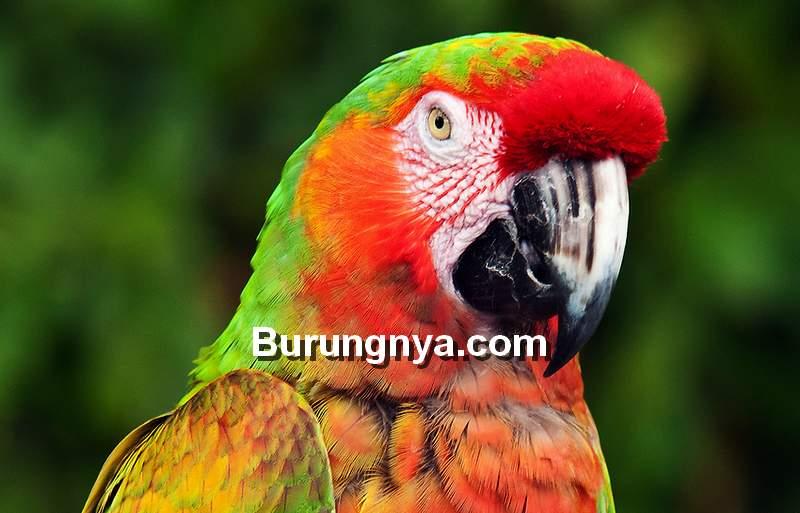 Hybrid Macaw (photoshelter.com)