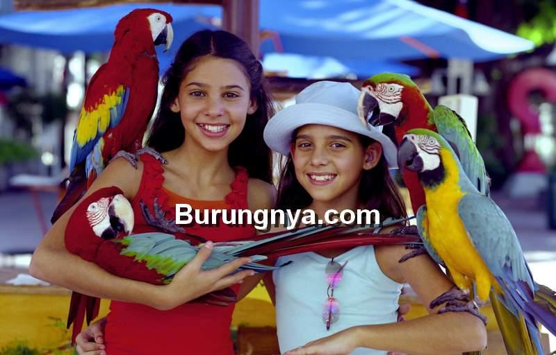 Jenis Burung Macaw (mlive.com)