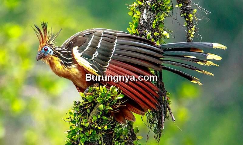 Jenis Burung Unik dan Aneh di Dunia (wildatitudes.com)