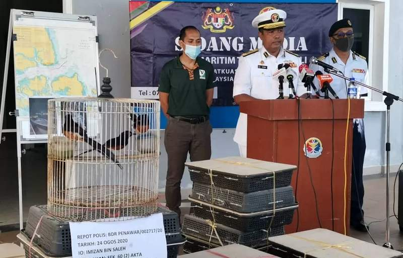 Penyelundupan Murai Batu Malaysia ke Indonesia (gardaanimalia.com)