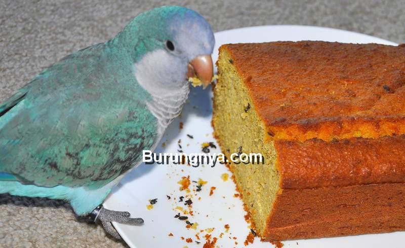 Makanan yang Tidak Baik untuk Kesehatan Burung (bistrogerard.wordpress.com)