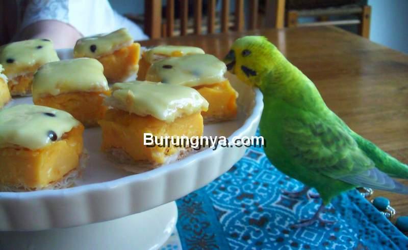 Makanan yang Tidak Boleh Diberikan ke Burung Kicau (pinterest.com)