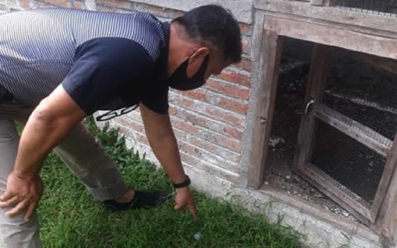Pencuri Burung Murai Batu Harga Rp 50 Juta, Sandalnya Ketinggalan (inews.id)