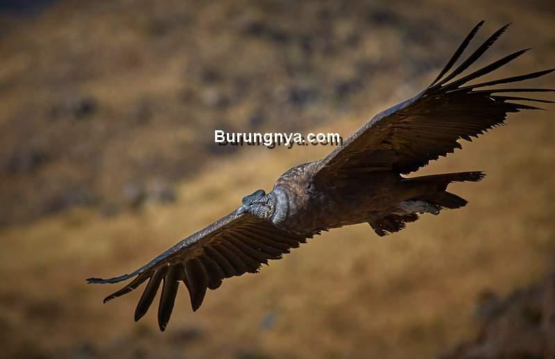 Burung Terbang dalam Al Quran (wikipedia.org)