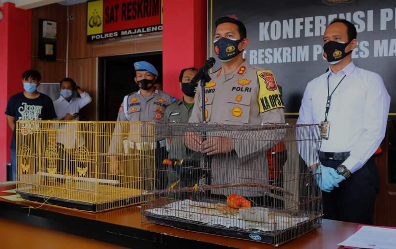 Jual Burung Dilindungi di Pinggir Jalan Ditangkap Polisi (ayobandung.com)