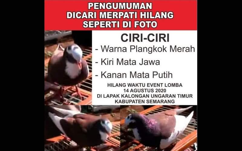 Sayembara Burung Merpati Hilang Hadiah Rp 10 Juta di Semarang (facebook.com)