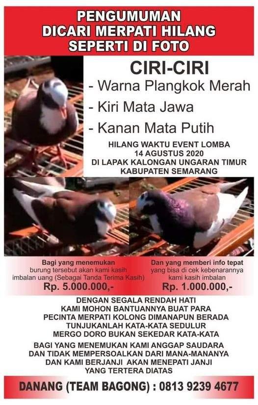 Sayembara Merpati Hilang Pertama (facebook.com)