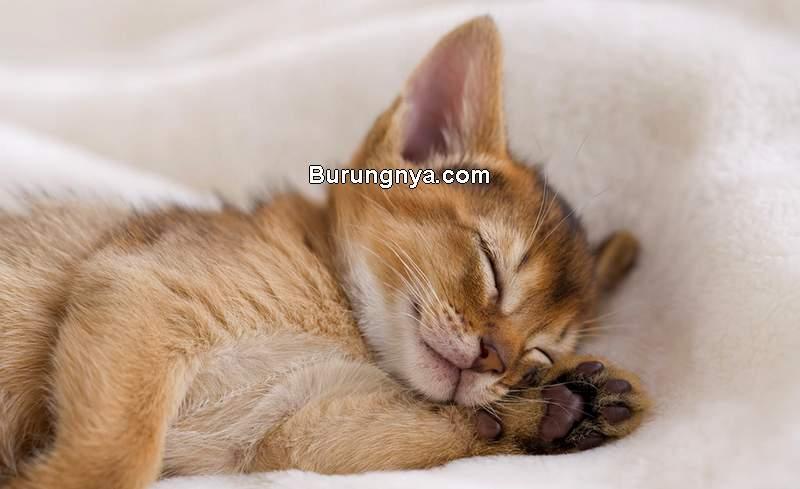 Anak Kucing Tidur (webmd.com)