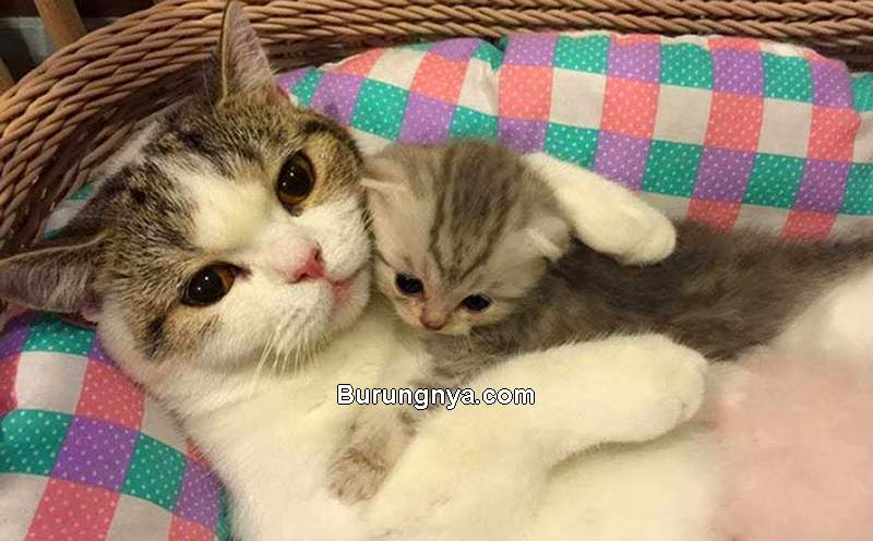 Anak Kucing dan Induknya (youtube.com)