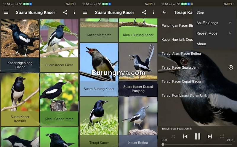 Aplikasi Masteran Kacer Gacor Full Isian (play.google.com)