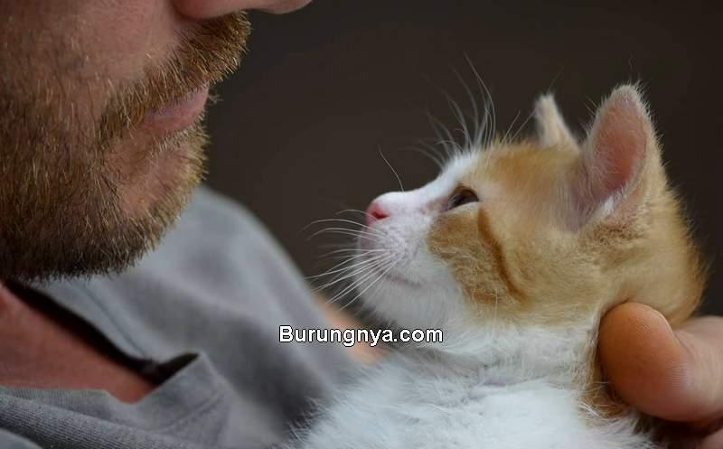 Arti Suara Kucing Meong, Jenis Suara, dan Bahasa Kucing (rover.com)