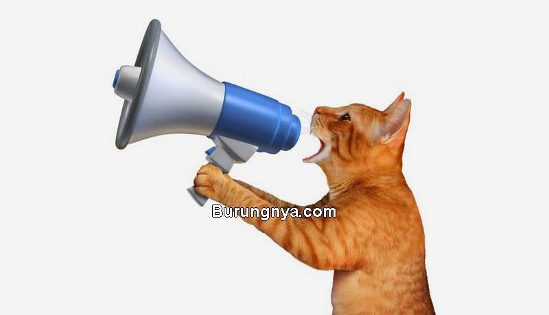 Arti Suara Kucing Meong (catsmeowings.com)