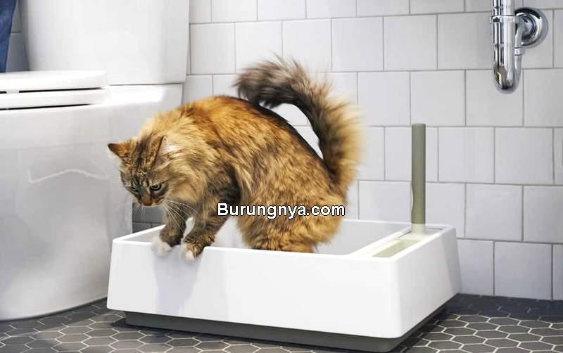 Cara Melatih Kucing Agar Tidak Buang Air Sembarangan (narcity.com)
