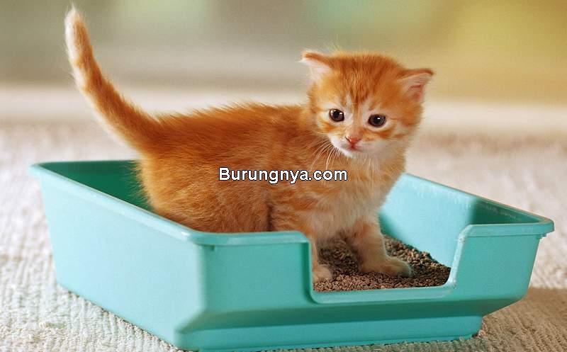 Cara Melatih Kucing Tidak Pipis Sembarangan (pets.webmd.com)