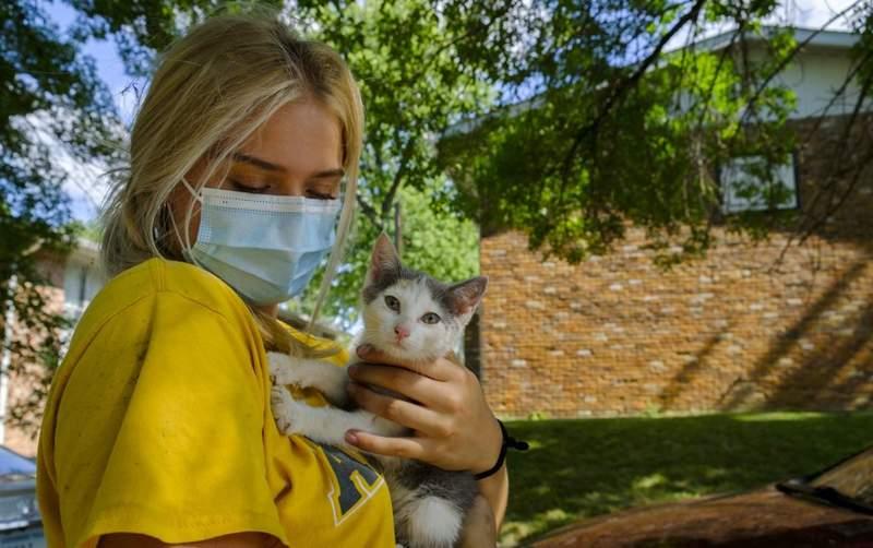 Cara Menemukan Kucing yang Hilang (bloomingtonian.com)