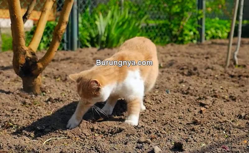 Cara Mengusir Kucing Buang Air di Halaman Rumah (motionarray.com)