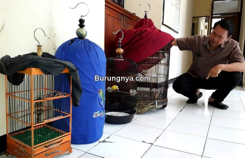 Curi Burung untuk Biaya Nikah (wordpress.com)
