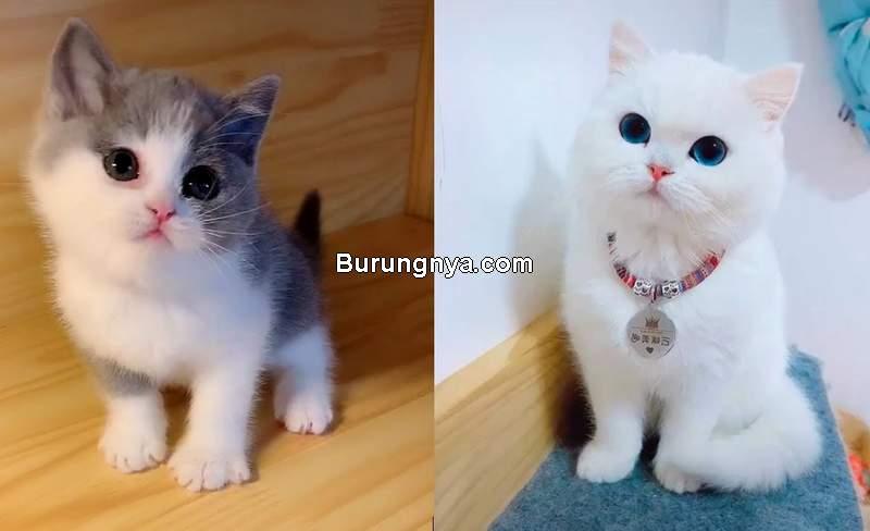 Kucing Imut (youtube.com)