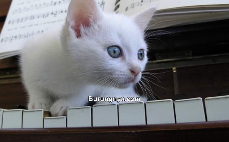 Kucing Kampung Putih (mentalfloss.com)